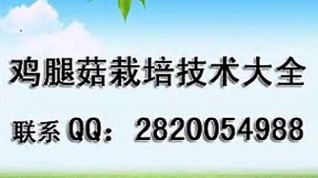 农林致富鸡腿菇优质高产栽培技术工厂化立体种植食用菌shiyongjun