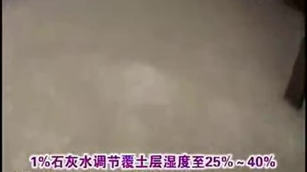 发家 故事发酵料栽培之鸡腿菇培育技能视频教稿,食用菌shiyongjun