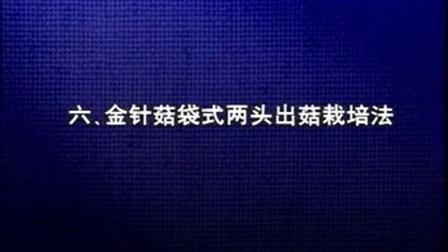 创业致富项目金针菇无土栽培之金针菇立体种植高产栽培技�c,食用菌shiyongjun