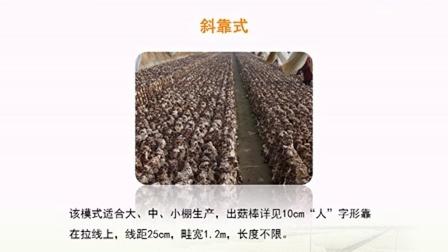 农业科技创新香菇种植技术培训之香菇规模化栽培新技�c,食用菌shiyongjun