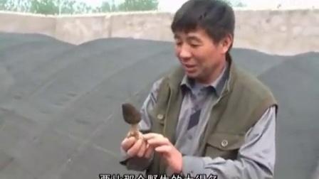 农业好项目如何种植羊肚菌技术培训立体种植高产栽培技�c,食用菌shiyongjun