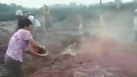 农业科技备料翻堆双孢菇种植\u2014立体种植高产栽培技�c,食用菌shiyongjun