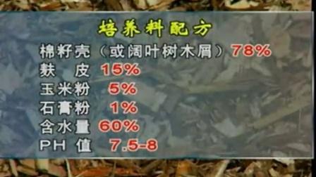 高新技术产业白灵菇有哪些优点之白灵菇立体种植高产栽培技�c,食用菌shiyongjun