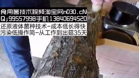 段木香菇石蜡封口食用菇牡蛎蕈厚纸板封��,食用菌shiyongjun