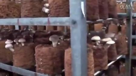 日本香菇标准化生产工县,食用菌shiyongjun