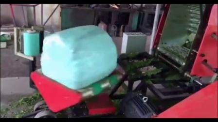 养牛饲料储存方法饲草青贮技术玉米秸秆青贮机械视频