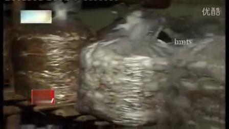 专访印度蘑菇生产商现场培育情��,食用菌shiyongjun