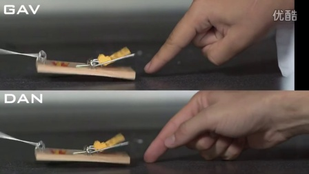 Mouse Trap Finger Challenge - The Slow Mo Guys|TheSlowMoGuys|151203
