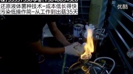 如何自主创业食用菌液体菌种生产之发酵罐接种操作步骤手把手教学食用菌shiyongjun