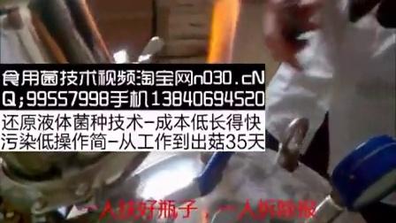 农村创业故事发酵罐液体菌种技术菌种制作之发酵罐使用抽滤瓶接种方法食用菌shiyongjun