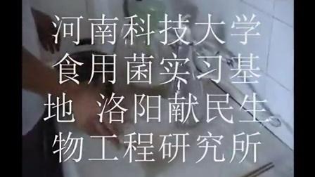 创业新项�a0L液体菌种发酵罐液体菌种摇瓶制作技�c,食用菌shiyongjun