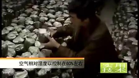 金针菇袋料栽培食用菌种植需要条件技术_标清食用菌shiyongjun