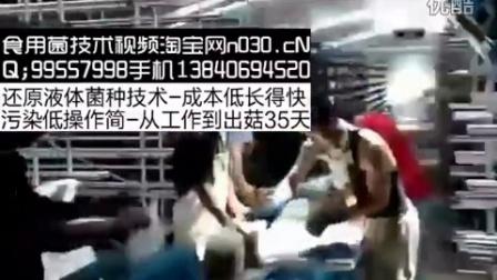 食用菌种植食用菌平菇割袋套橡皮圈录像视频食用菌shiyongjun