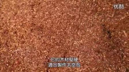 最新桑枝台湾香菇栽培模式(精品)成哿科普教材食用菌shiyongjun