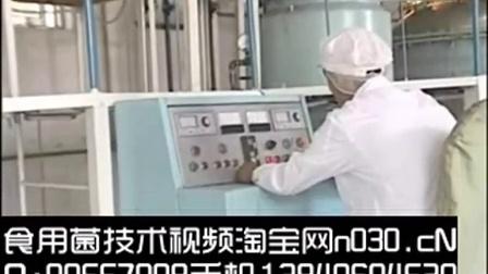 致富好项目食用菌液体菌种工厂化栽培优良菌种培育技�c,食用菌shiyongjun
