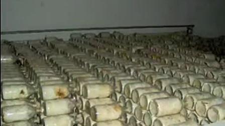 中国农业菇种选择双孢菇培育\u2014立体培育高产栽培技�v,食用菌shiyongjun