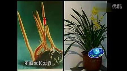 农业培育北虫草培育蛹虫草培育之北虫草培育技能视�c在线收看食用菌shiyongjun