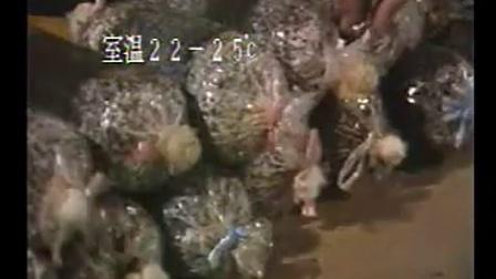 创富小项目高效农业棉子壳培育食用菇高产栽培技�v,食用菌shiyongjun