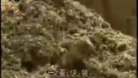 养殖项目冻菌工厂化栽培的优势之冻菌高产栽培技�v,食用菌shiyongjun