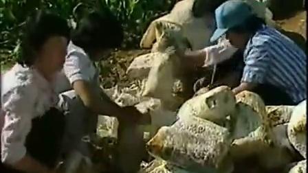 创富经项目玉米平茹木耳立体培育之立体培育高产栽培技�v,食用菌shiyongjun