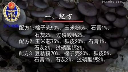 小本创富无公害平菇栽培技能规程立体培育高产栽培技�v,食用菌shiyongjun