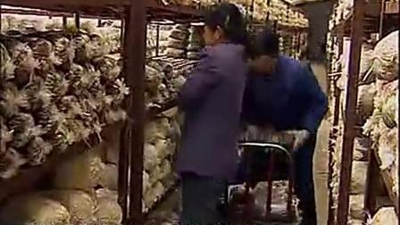 投入好项目猴头菇的培育技能之猴头菇温室栽培技�v1)_标清食用菌shiyongjun