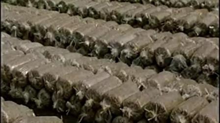 创富途径冻菌装料技能要点之冻菌袋料栽培第一�,食用菌shiyongjun
