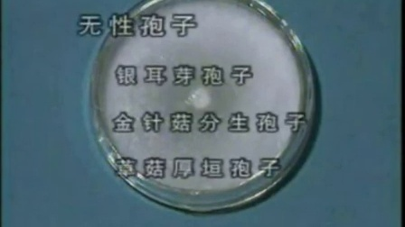 怎么挣钱常规食用菇栽培基本技能二(栽培种培养)技能_02食用菌shiyongjun