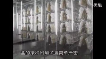 第三代防污染北虫草栽培盒无架立体栽培模式食用菌shiyongjun