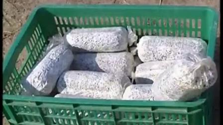 稻草立体栽培食用菌优质高效种植高产培养栽培新技术_标清食用菌shiyongjun