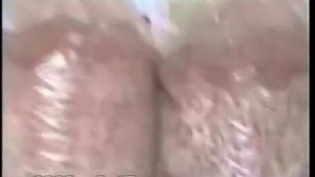 创业的故事大球盖菇优质高效种植高产培养栽培新技�c015年新版视频_标清食用菌shiyongjun