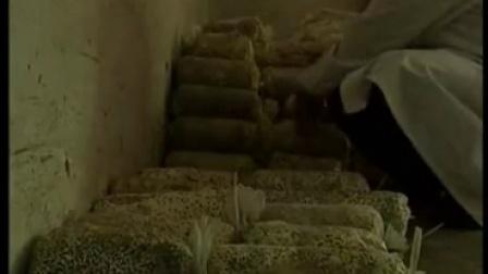 平菇优质高效种植高产培养栽培--新技术食用菌生产与加工贮藿3)食用菌shiyongjun