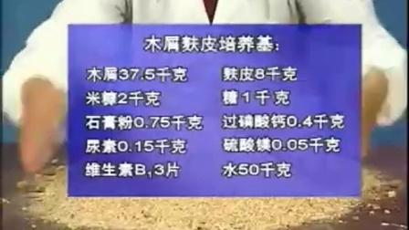 致富投资小项目袋料香菇生产技术中之香菇种植视频试�,食用菌shiyongjun