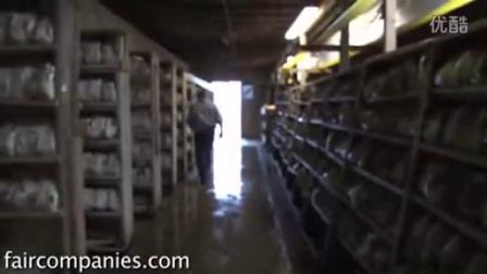 如何耕种蘑菇-方袋栽培姬菇小平菇小型工厂种椿,食用菌shiyongjun