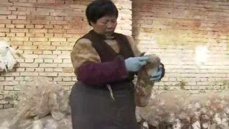 香菇转色期管理优质高效种植高产培养栽培新技�c,食用菌shiyongjun