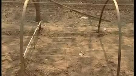 香菇林地优质高效种植高产培养栽培新技�c,食用菌shiyongjun