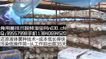 柞蚕、食用菌香菇循环利用技术今年将在辽宁省开始推广_[新闻]食用菌shiyongjun