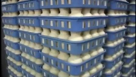 日本蟹味菇真姬菇食用菌工业化生产工�鱿晗干�产工艺-国外技术qa食用菌shiyongjun