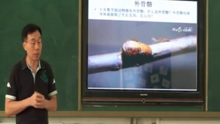 深圳市网络课堂初中生物同步课堂教学课例(八年级生物)