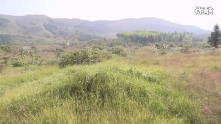 广西科源家禽养殖有限责任公司-养牛场视频