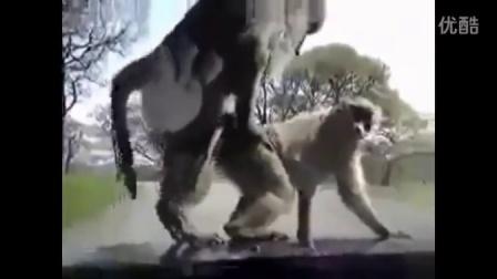【藤缠楼】动物们玩起恶作剧一点不比人类逊色