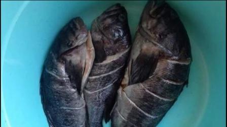 美女捕鱼手憋气近5分钟用牙咬死章鱼1602美女痢下图片