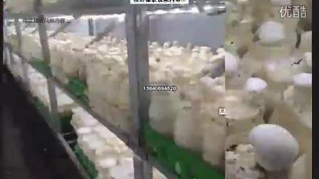 一种全白动食用菌栽培料装袋�c性能不稳宿操作简卿专利技�c016-2-3 10-11-29食用菌shiyongjun