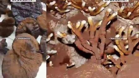 一种食用菌栽培瓶筐,不容易分离的整体,令其运输中更平稳-专利技�c016-2-3 11-00-55食用菌shiyongjun