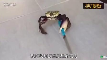 儿童折纸螃蟹步骤图解