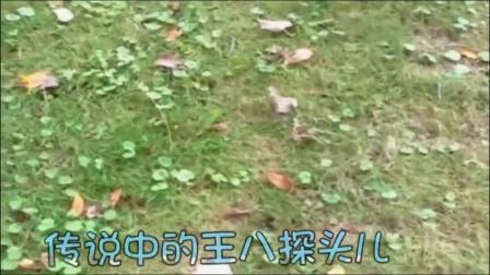"""史上最奇葩的""""双胞胎""""艳遇 22"""