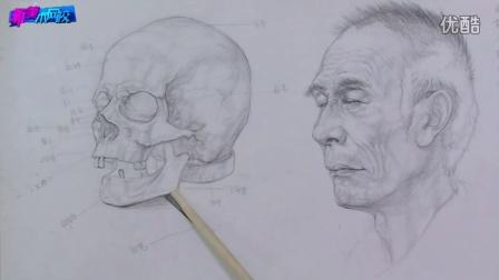 头骨结构图素描教学