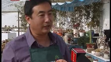 首都经济报道20160229北京首家多肉植物花园开园趣味植物魅力十足高清视频