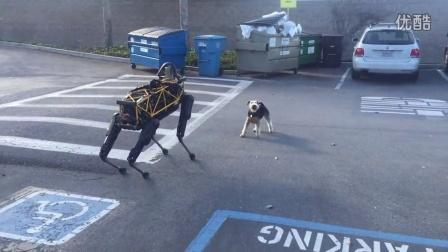 汪星人智斗机器犬,哈哈