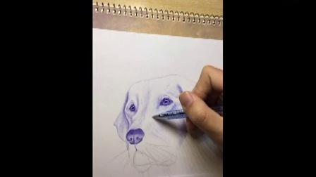 橙子手绘-圆珠笔狗狗